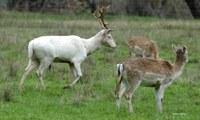 Landholder's perception to wild deer survey