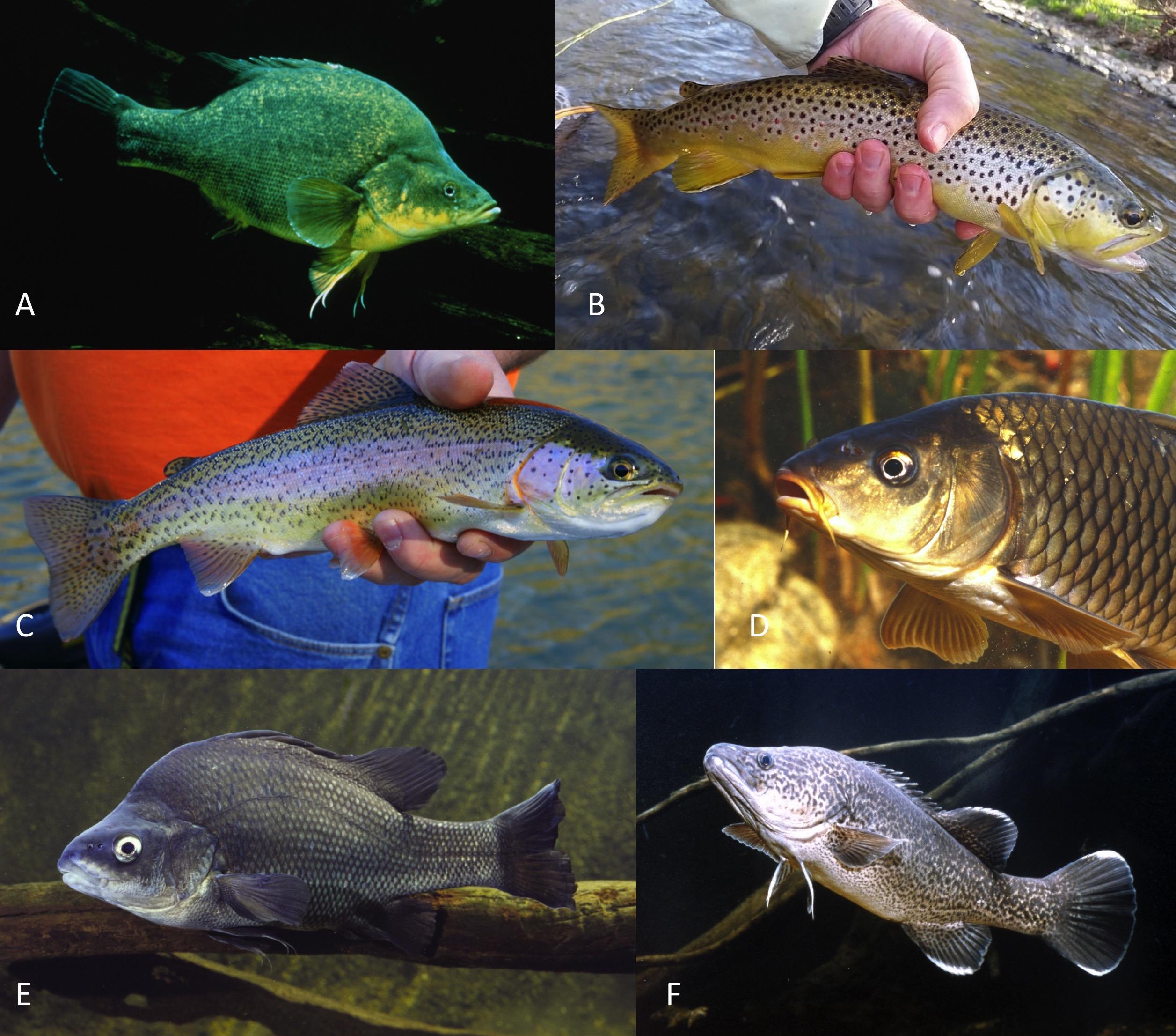 Survey fish.jpg