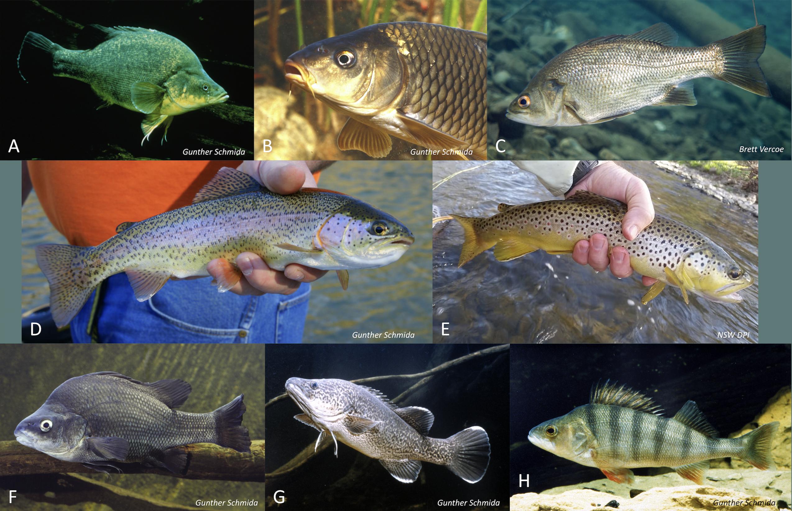 Survey fish.png