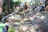 Comenarra Creek Restoration Project Revisit