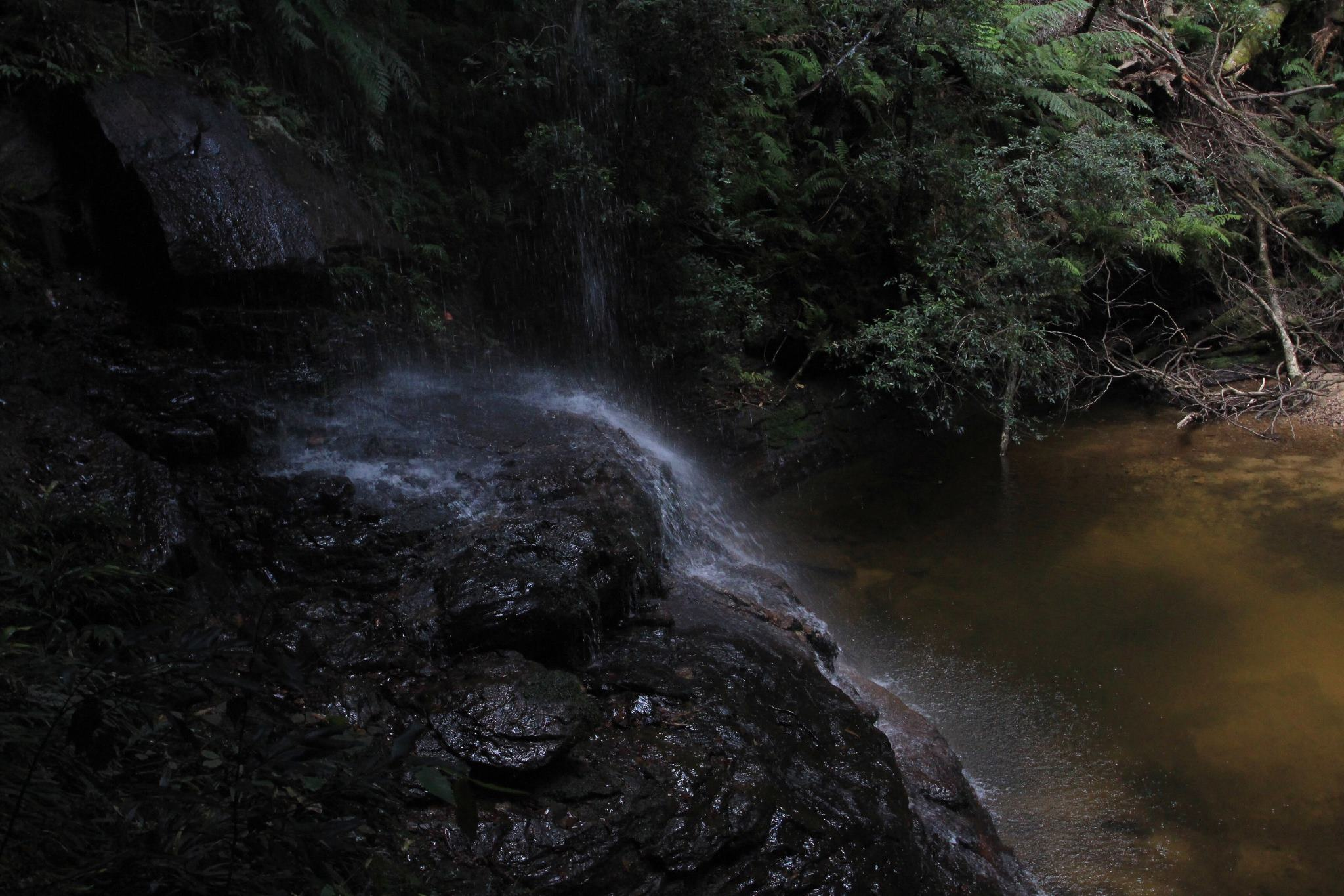 Water Nymphs Dell.jpg