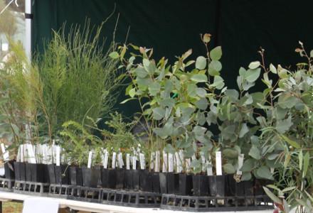 Plant Sales