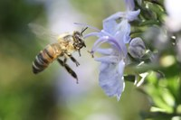 A new group for aspiring bee keepers