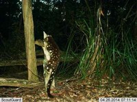 Have you seen any Quolls in the area?