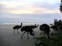 Help map emu genetics