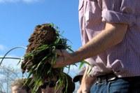 Improve your soil health