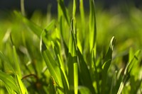 Pasture management field day reschedule