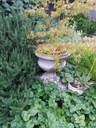 Wild weeds, gardens and Costa in Kandos