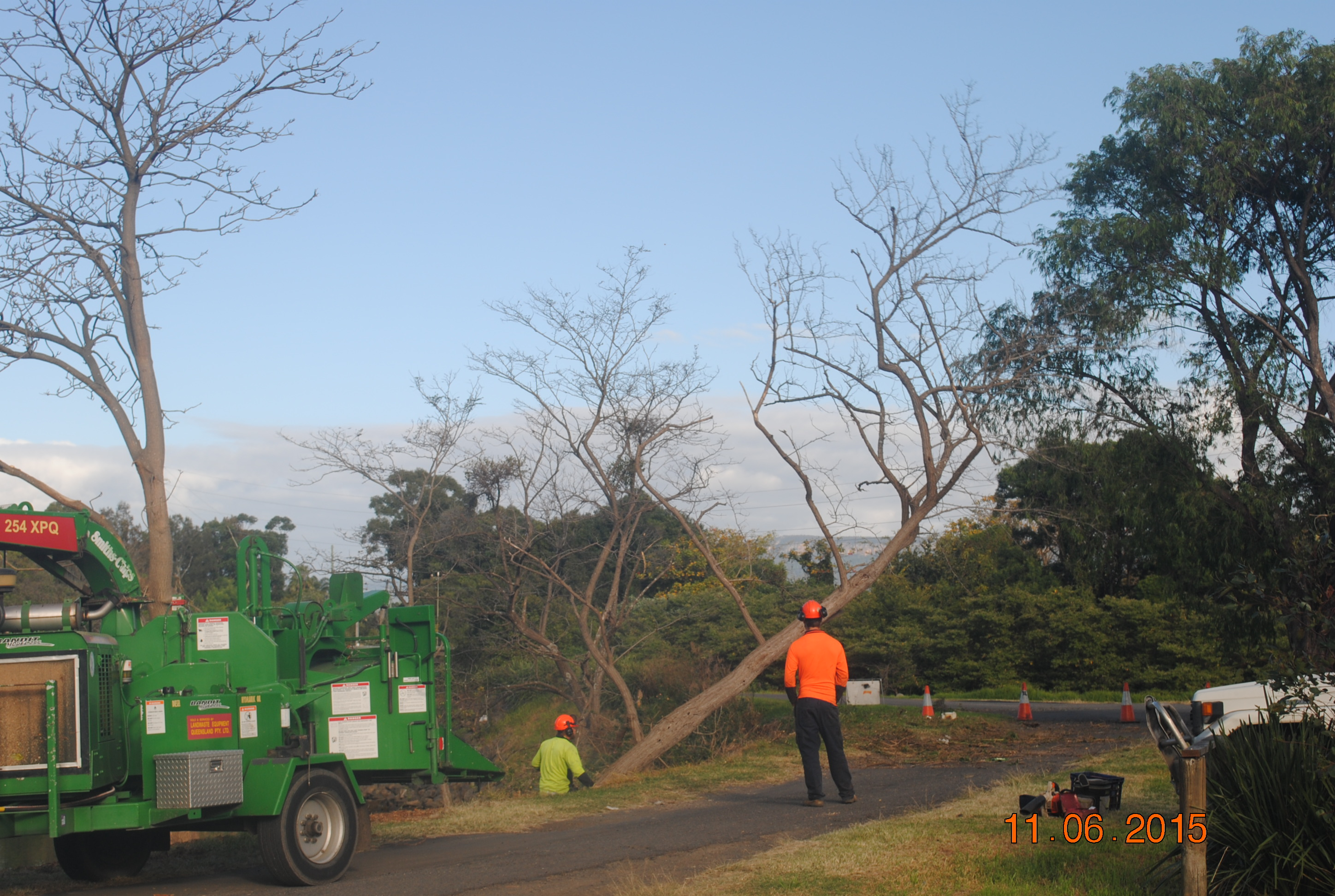 Down come the Coral Trees