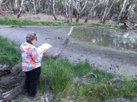 2019/20 Frog Survey - Upper section of the Yanco Creek System