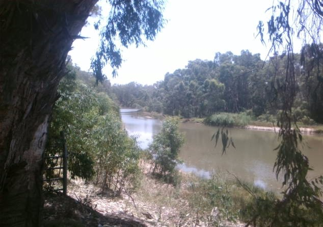 Natural beauty of the Yanco Creek System