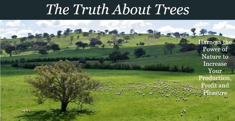 truth+about+trees.jpg
