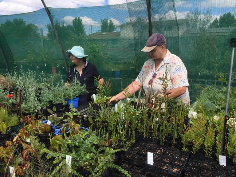 Volunteers doing vital plant maintenance