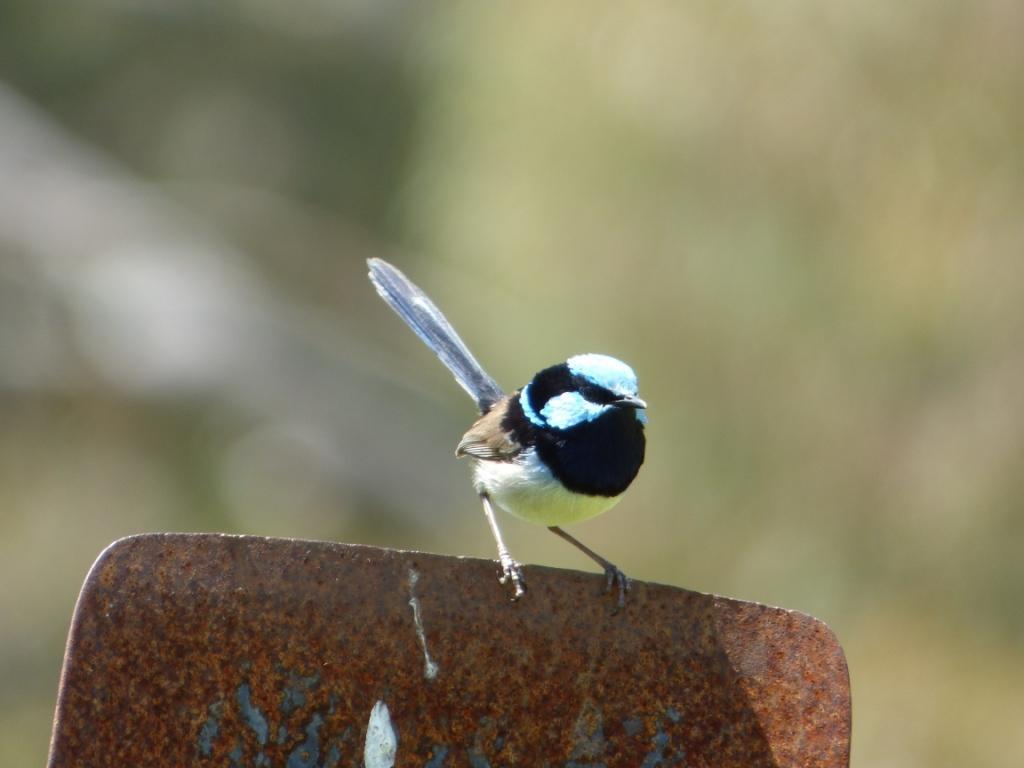 Murringo Bird Walk
