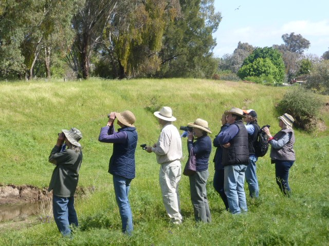 Murringo Bird Walk